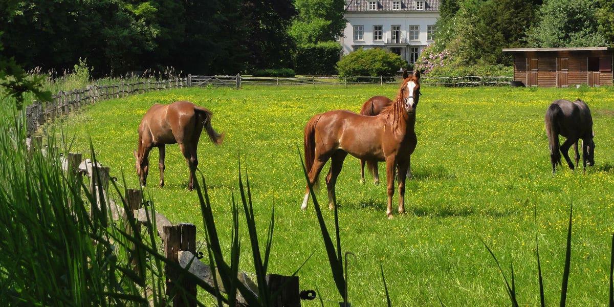Paardenomheining