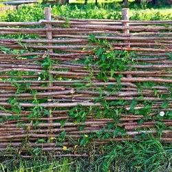 wilgentenen schutting tuin